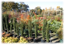 Mitchell's sells a large variety of trees and shrubs