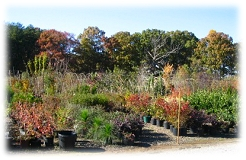 Mitchell's grows one of the largest selections of trees and shrubs in North Carolina