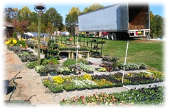 Mitchell's grows over 100,000 Pansies and Violas in the fall with over 50 varieties