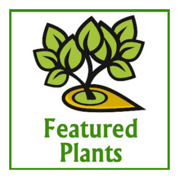 MNGfeatured-plants