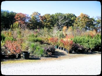 shrubs_comv