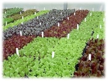veg_plants
